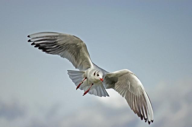 Birds_4