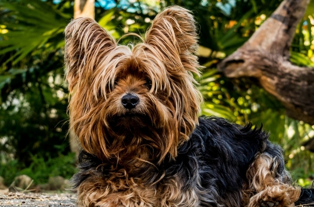 Dogs_6