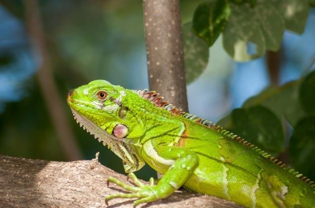 Lizards_2