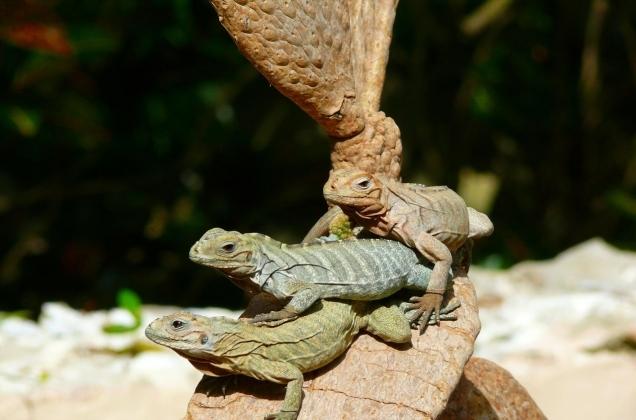 Lizards_3