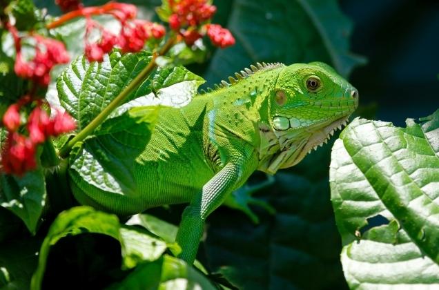 Lizards_5
