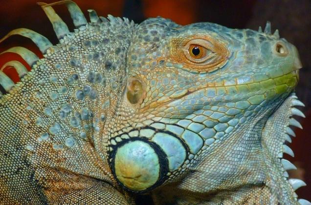 Lizards_7